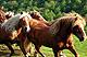 Cavallo_de_Bisbinothumbnail.jpg