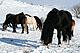 Horse_group_Ivanovthumbnail.jpg