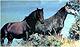 Rhodope_Horsethumbnail.jpg
