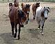 Serres_Horsethumbnail.jpg