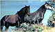 feral_Rhodope_Horse_thumbnail.jpg