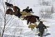 feral_Vlasina_Mountain_Horse_thumbnail.jpg
